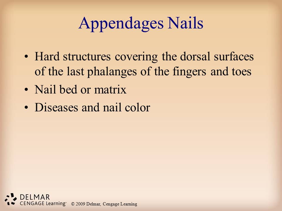 Appendages Nails Hard structures covering the dorsal surfaces of the last phalanges of the fingers and toes.