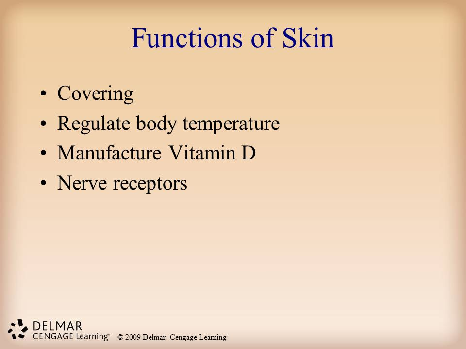 Functions of Skin Covering Regulate body temperature