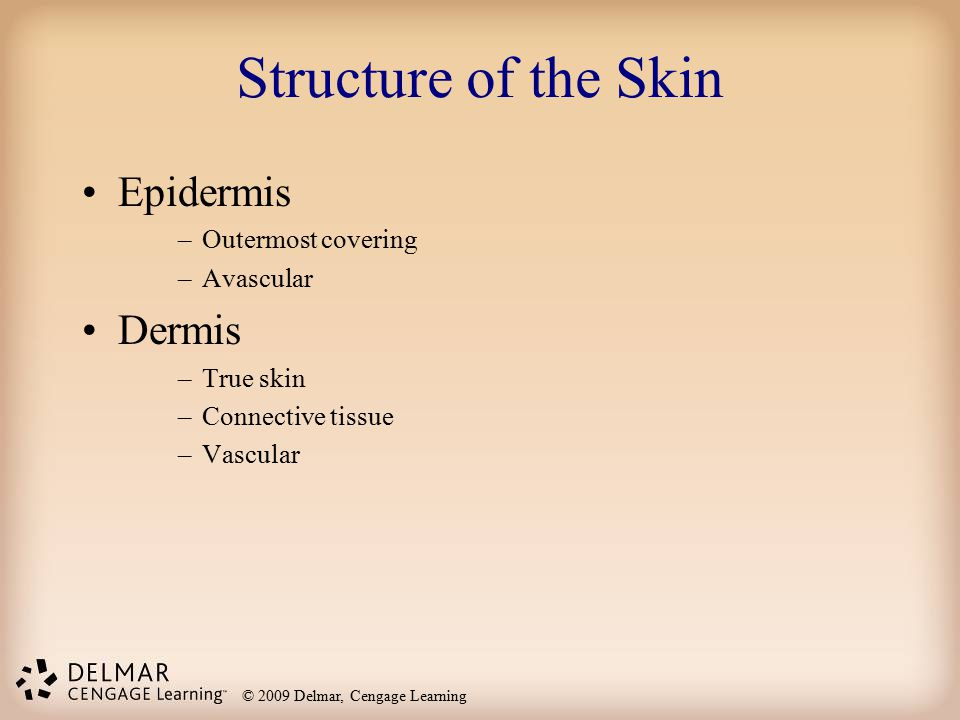 Structure of the Skin Epidermis Dermis Outermost covering Avascular