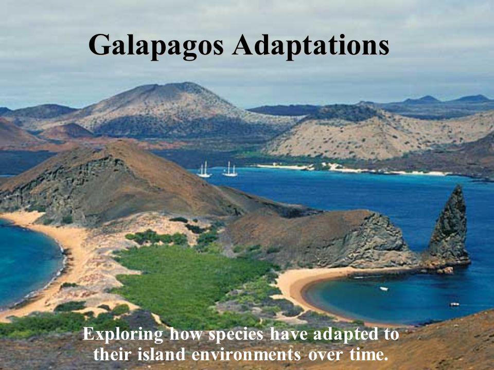 Galapagos Adaptations