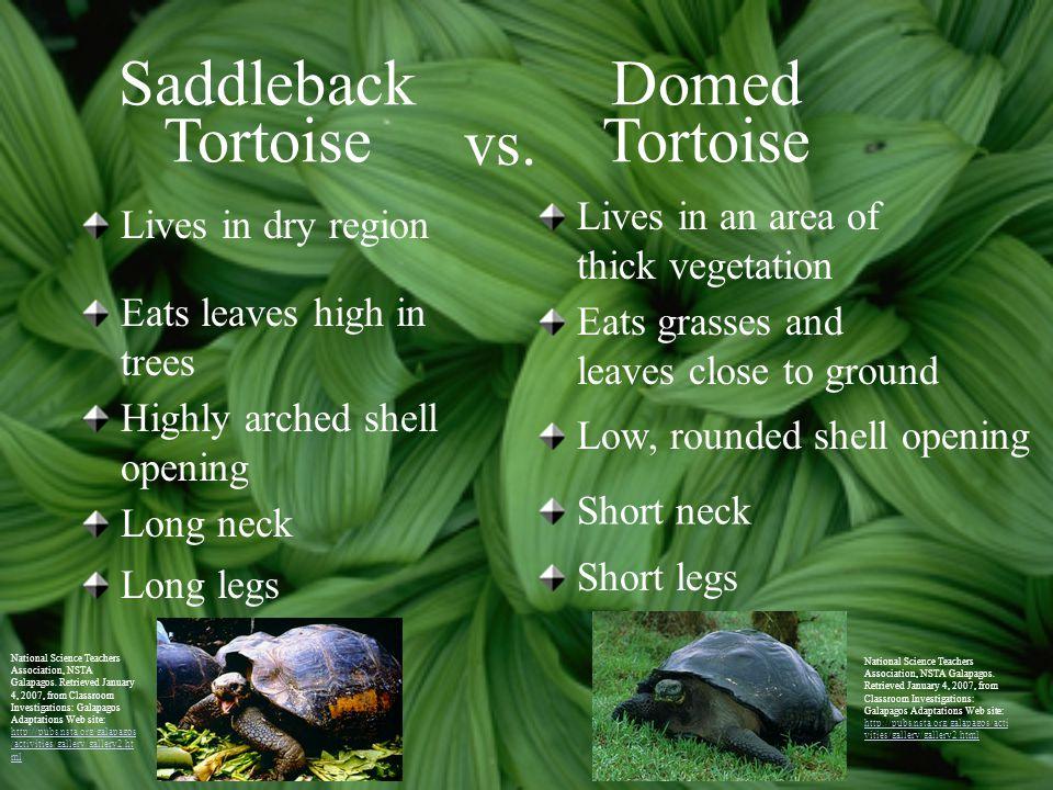 Saddleback Tortoise Domed Tortoise vs.
