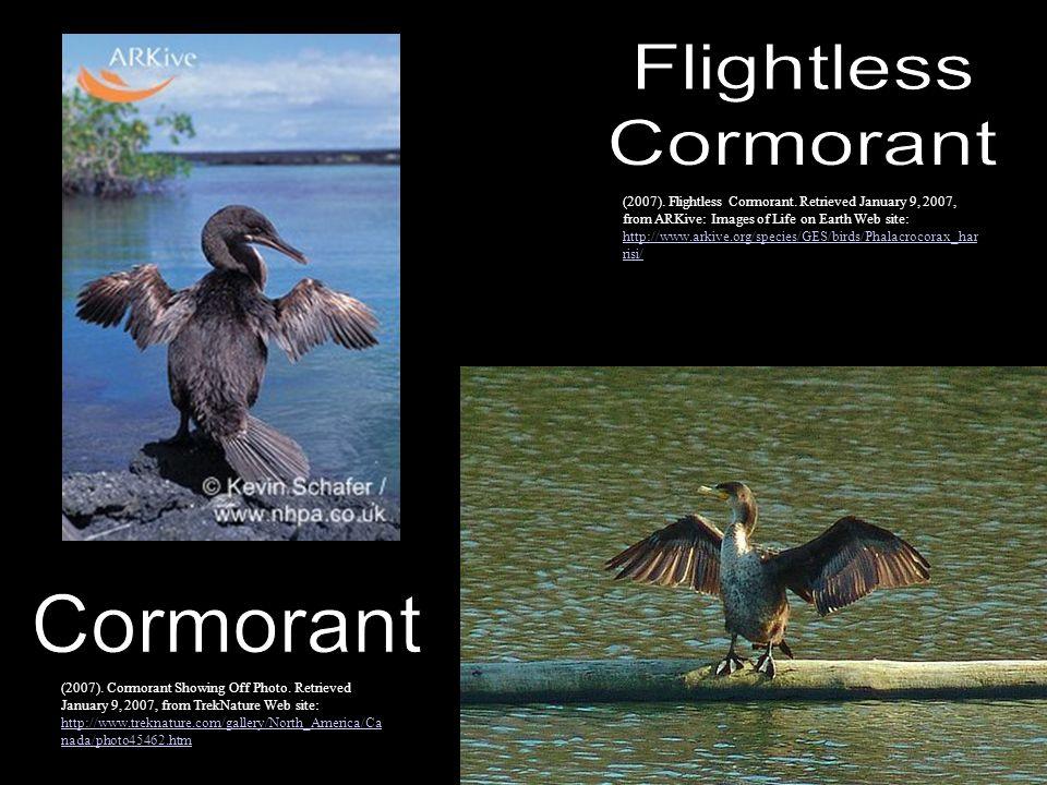 Flightless Cormorant Cormorant
