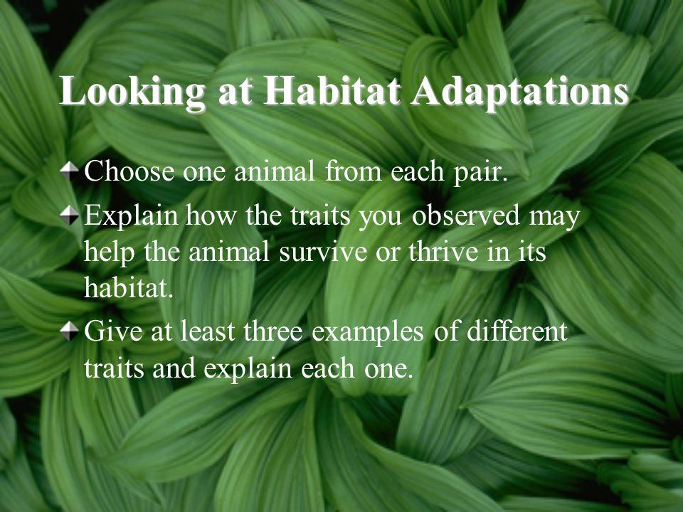 Looking at Habitat Adaptations