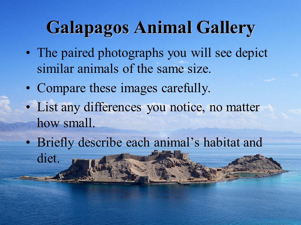 Galapagos Animal Gallery
