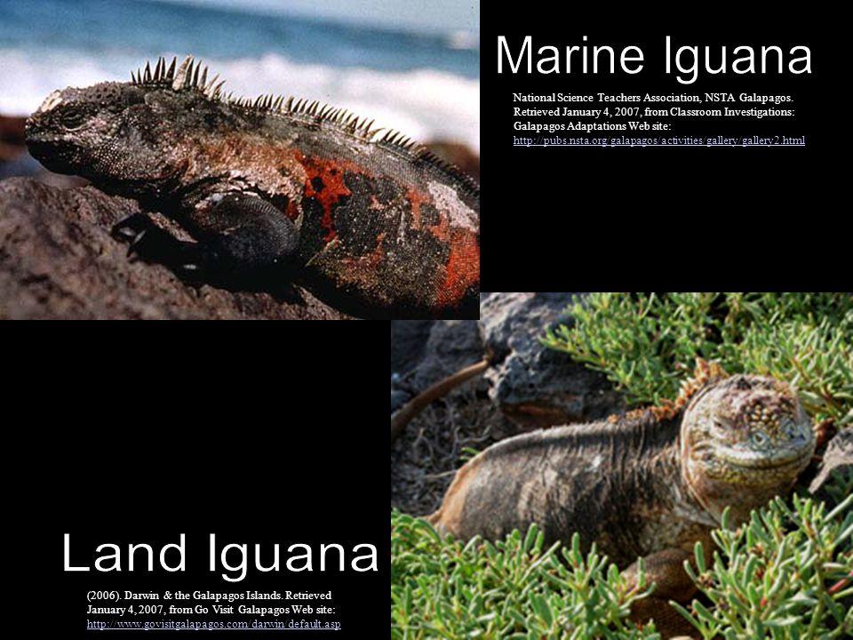 Marine Iguana Land Iguana