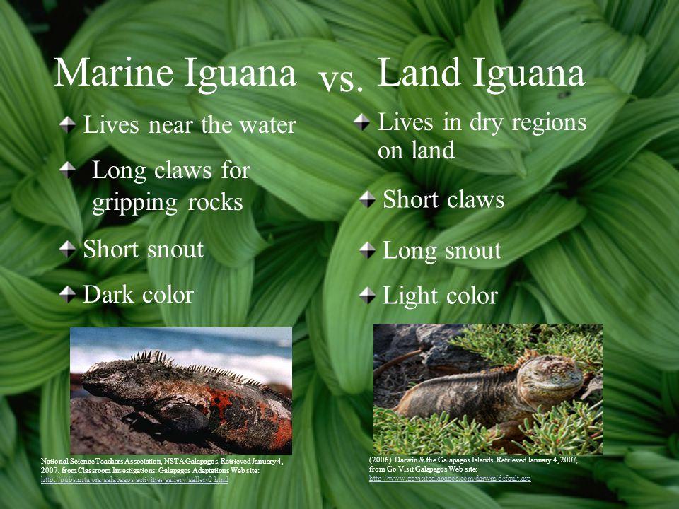 Marine Iguana Land Iguana vs. Lives near the water