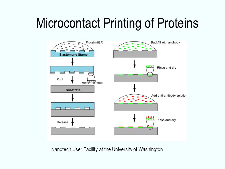 Microcontact Printing of Proteins