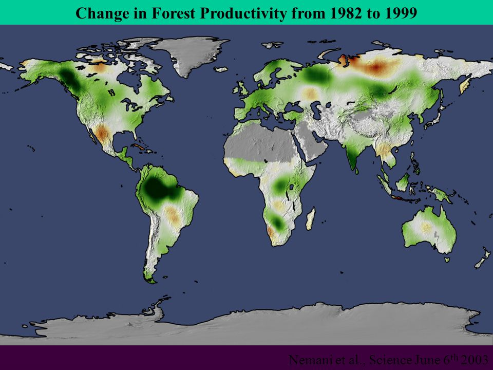 Change in Forest Productivity from 1982 to 1999