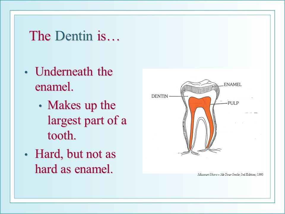 The Dentin is… Underneath the enamel.