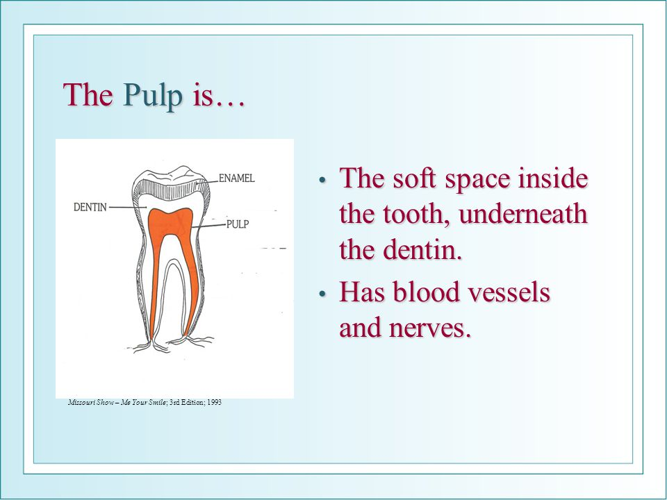 The Pulp is… The soft space inside the tooth, underneath the dentin.