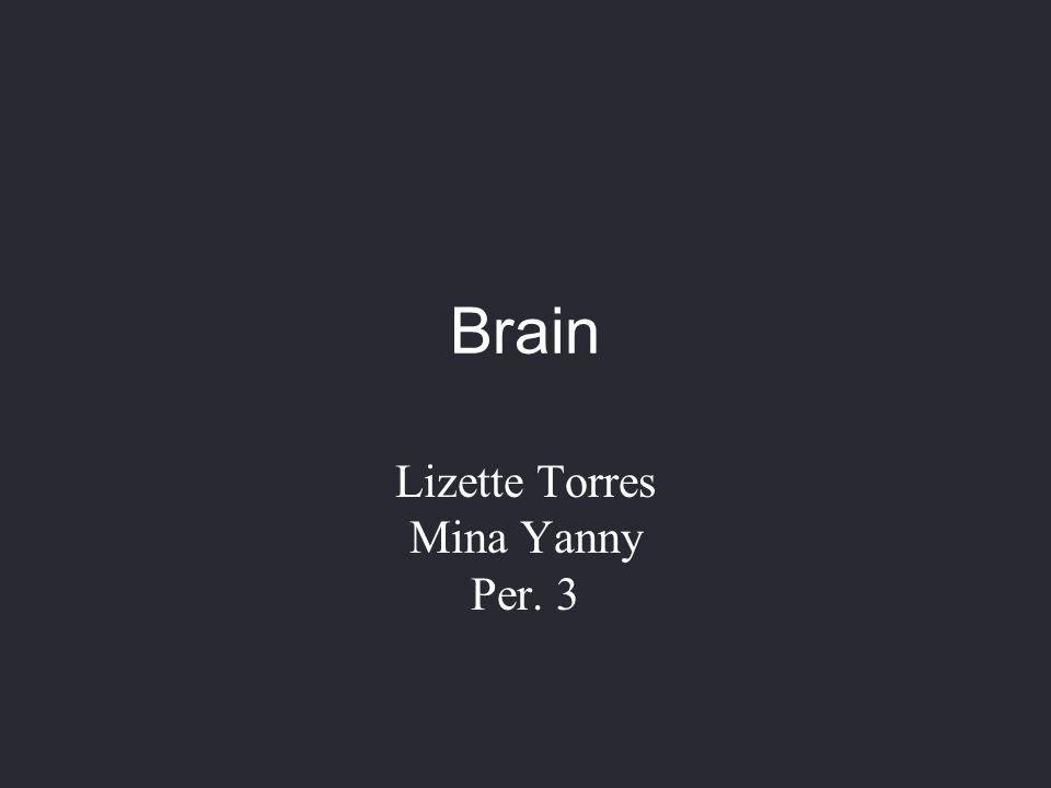 Lizette Torres Mina Yanny Per. 3