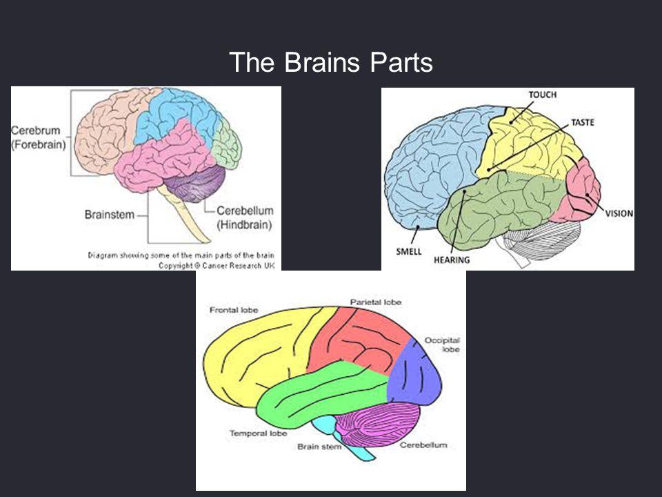 The Brains Parts
