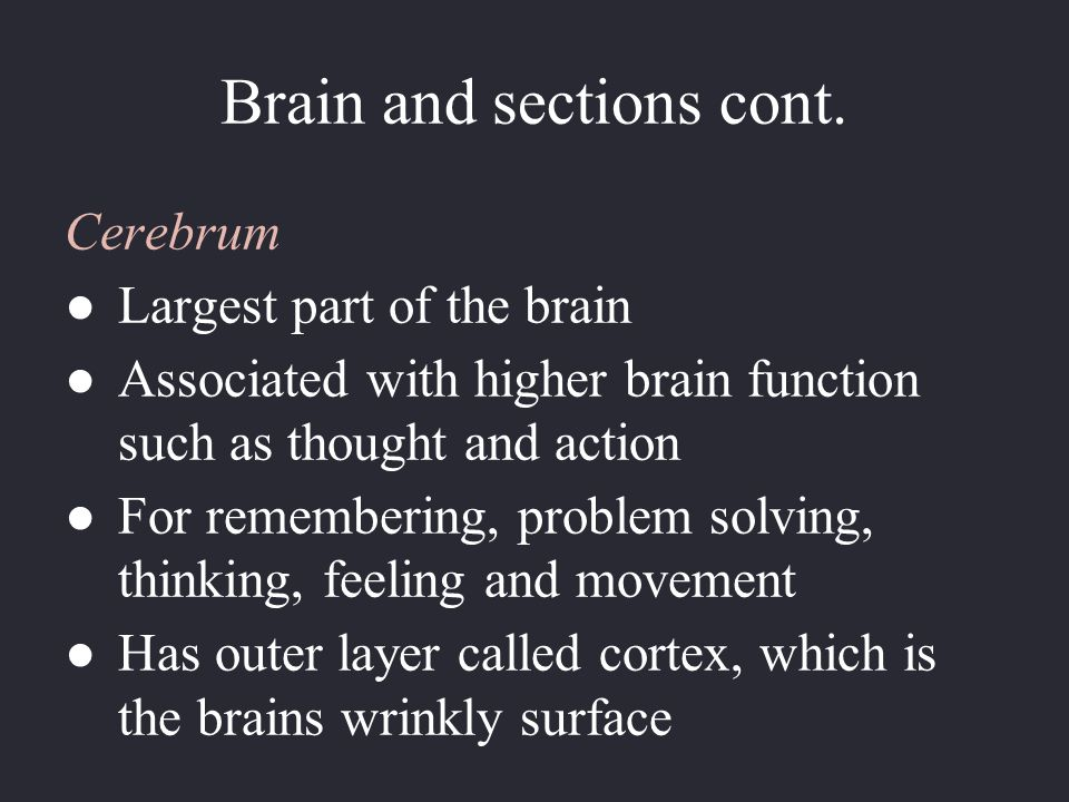 Brain and sections cont.