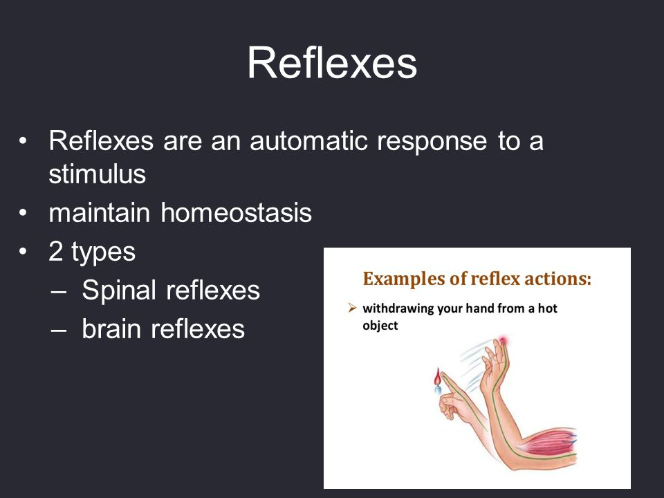 Reflexes Reflexes are an automatic response to a stimulus