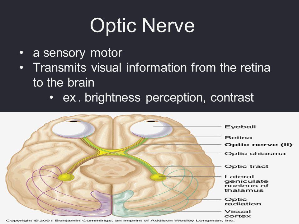 Optic Nerve a sensory motor