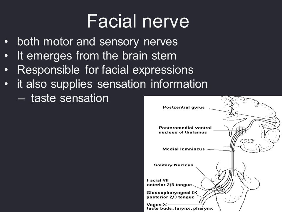 Facial nerve both motor and sensory nerves