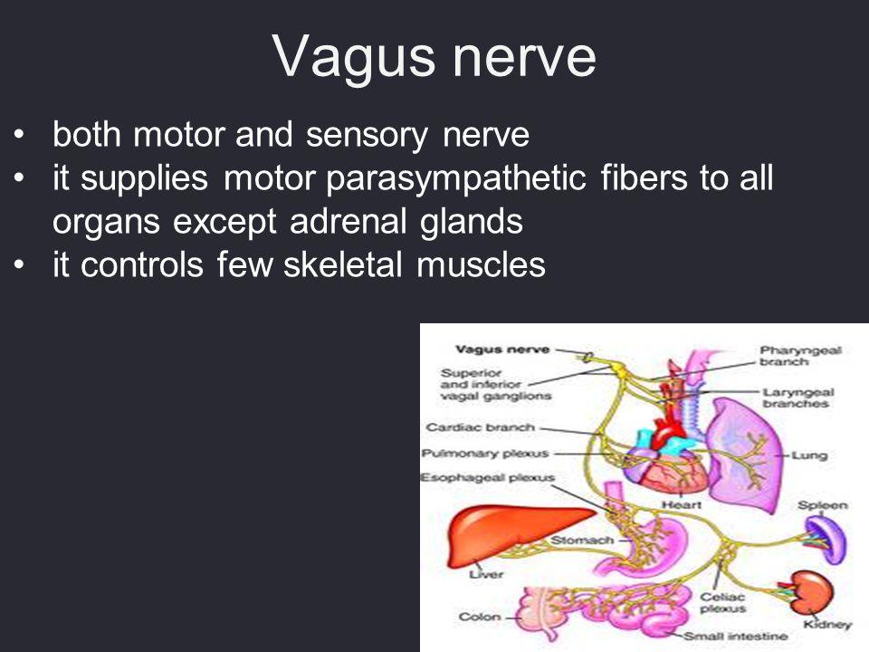 Vagus nerve both motor and sensory nerve
