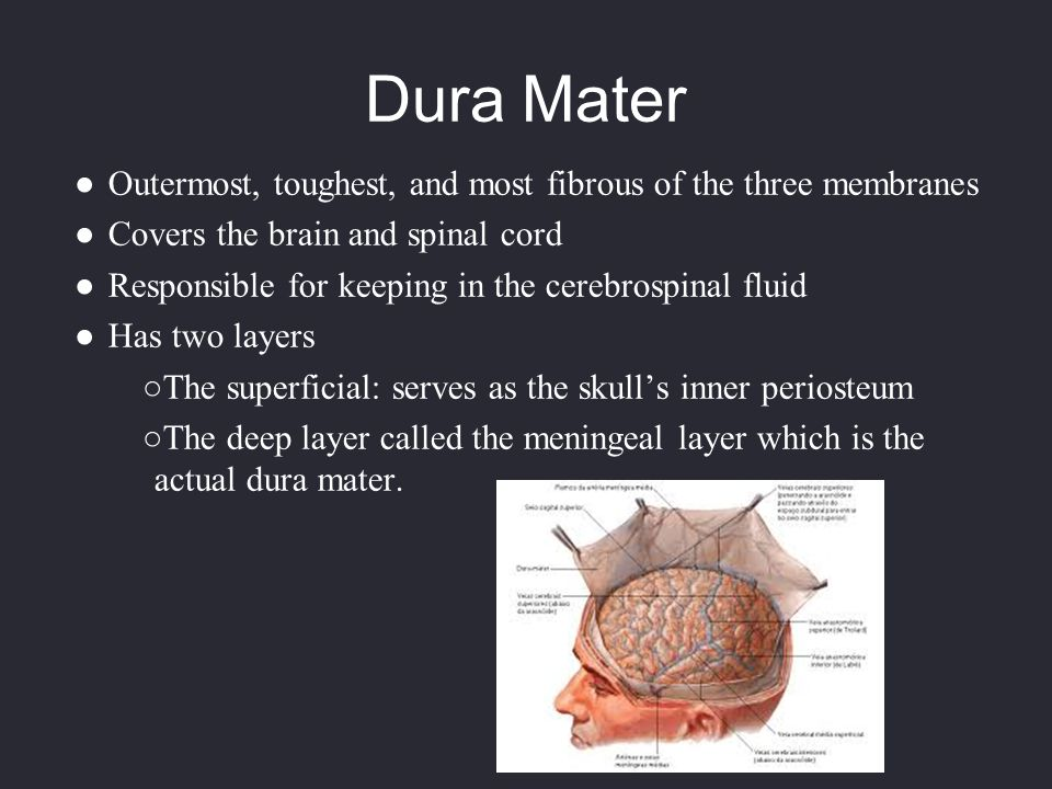 Dura Mater Outermost, toughest, and most fibrous of the three membranes. Covers the brain and spinal cord.