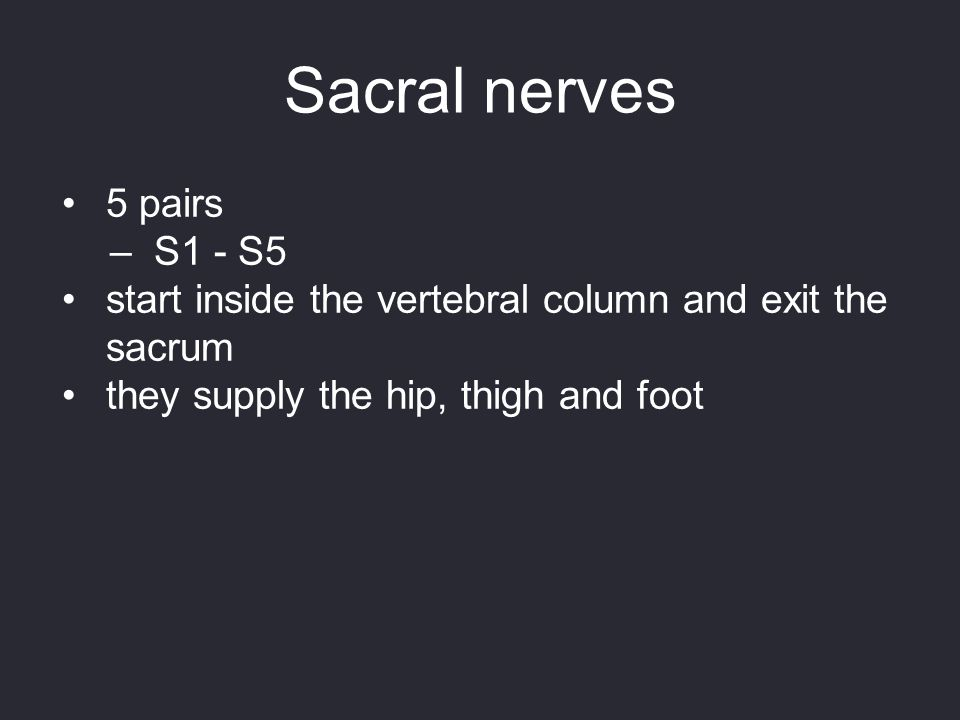Sacral nerves 5 pairs S1 - S5