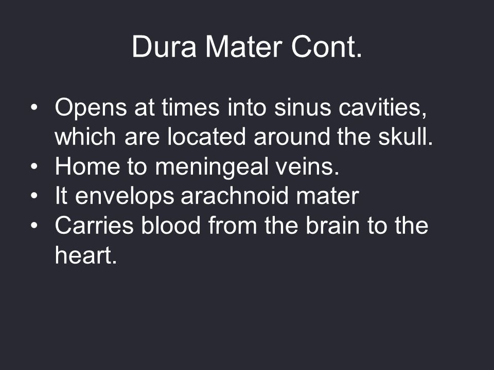 Dura Mater Cont. Opens at times into sinus cavities, which are located around the skull. Home to meningeal veins.
