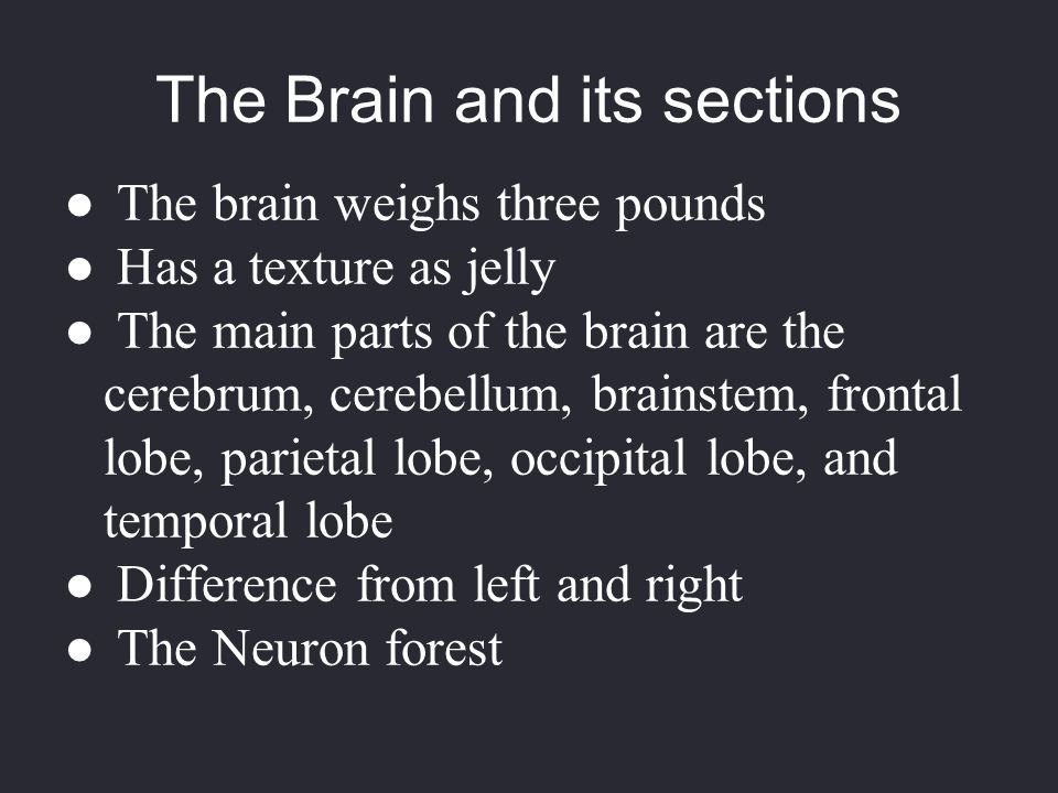 The Brain and its sections