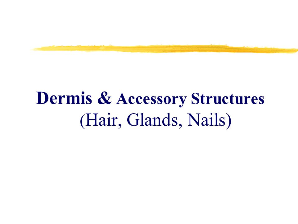Dermis & Accessory Structures (Hair, Glands, Nails)