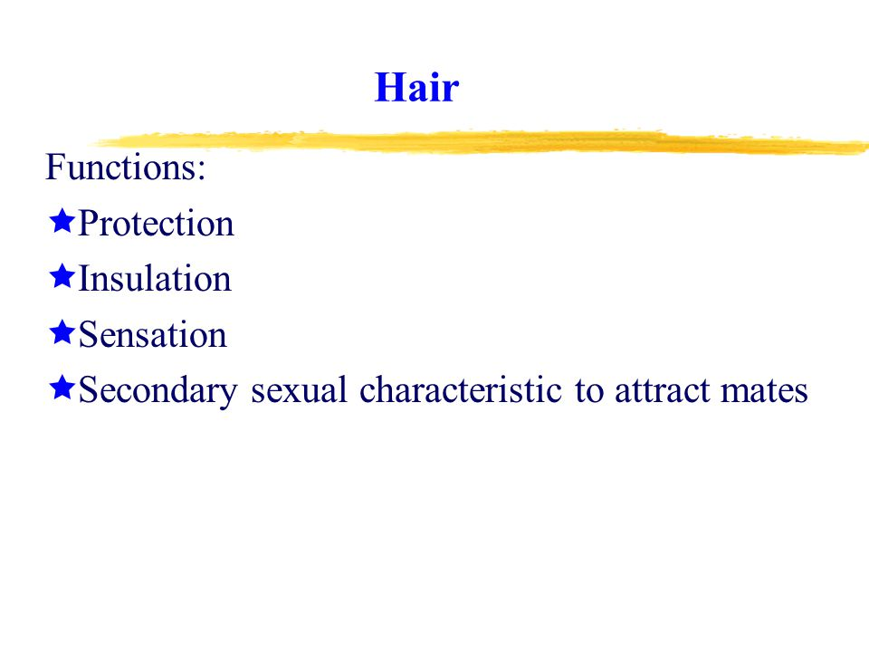 Hair Functions: Protection Insulation Sensation