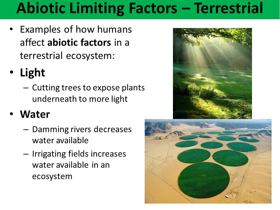 How abiotic factors affect the biota
