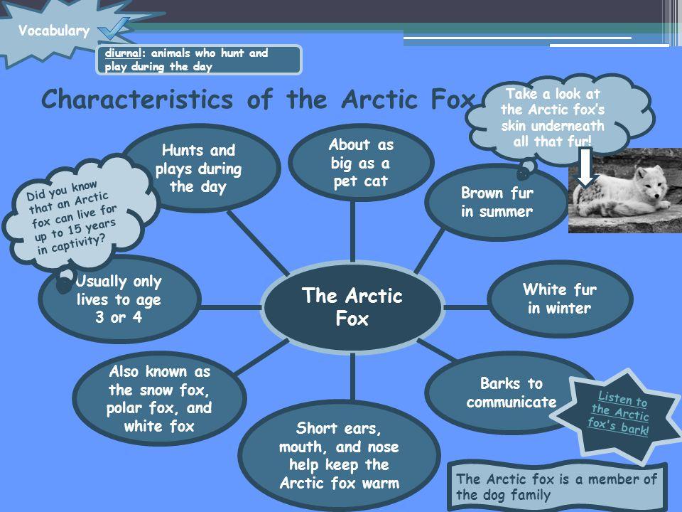Characteristics of the Arctic Fox