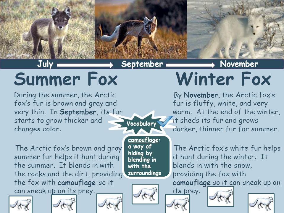 Summer Fox Winter Fox July September November