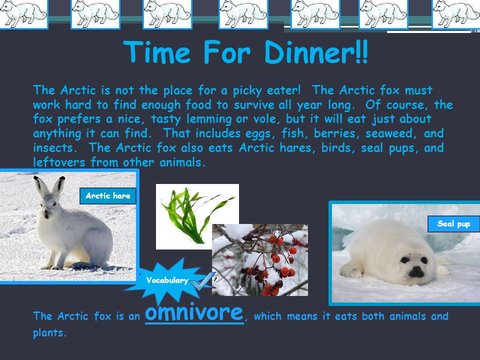 Time For Dinner!!