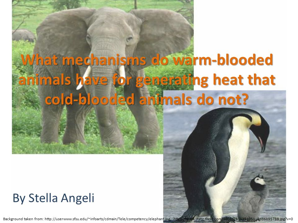 What mechanisms do warm-blooded animals have for generating heat that cold-blooded animals do not
