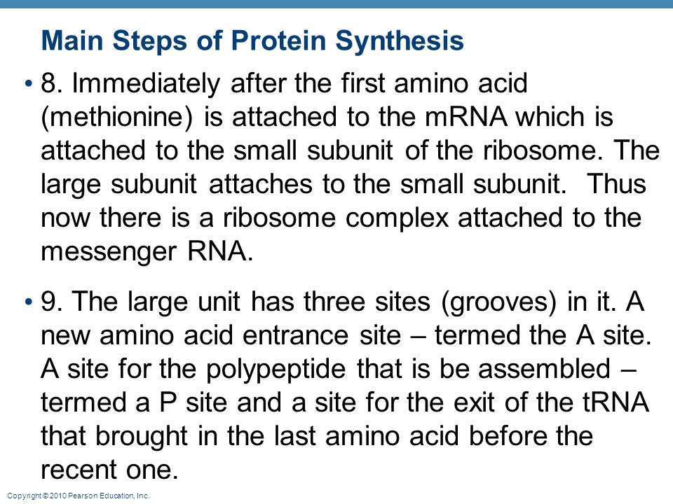 Main Steps of Protein Synthesis