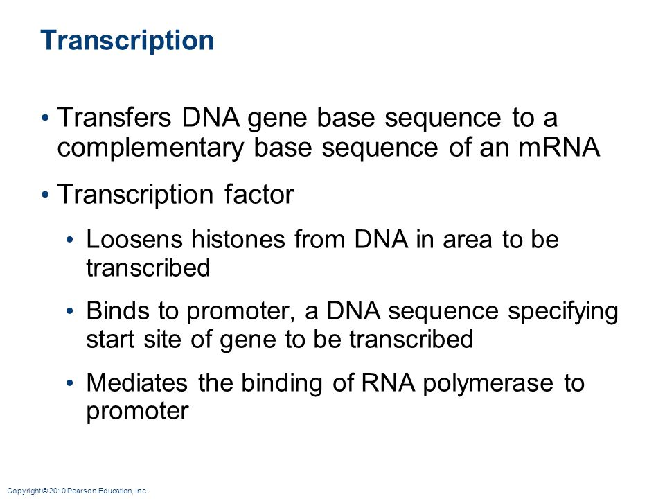 Transcription Transfers DNA gene base sequence to a complementary base sequence of an mRNA. Transcription factor.