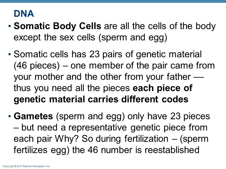 DNA Somatic Body Cells are all the cells of the body except the sex cells (sperm and egg)