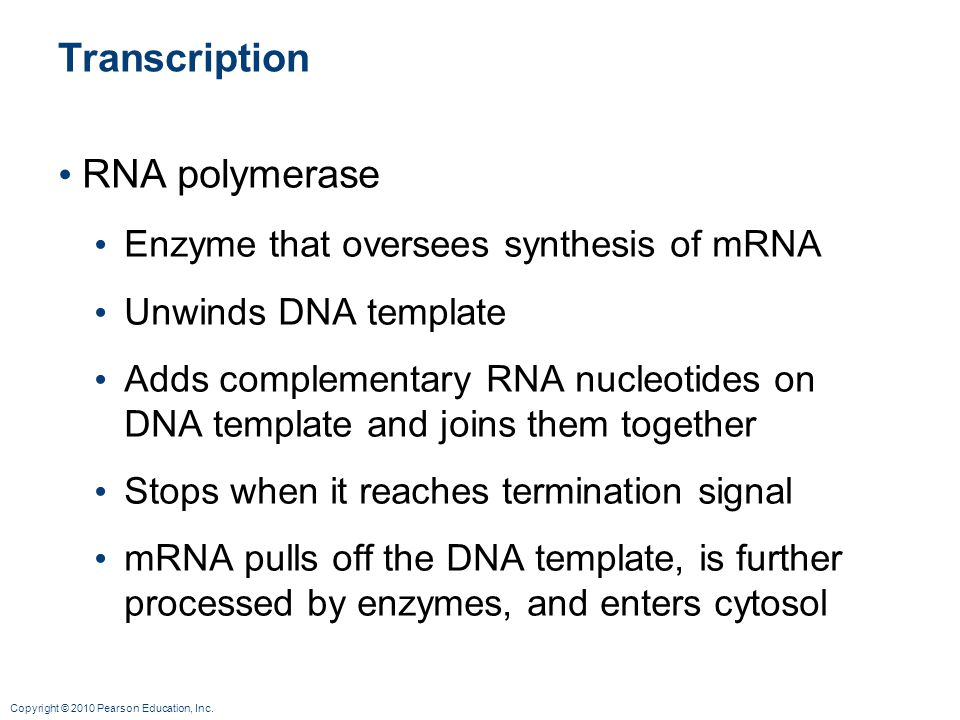 Transcription RNA polymerase Enzyme that oversees synthesis of mRNA