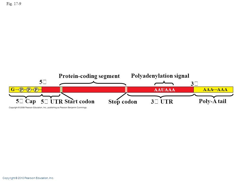 Protein-coding segment Polyadenylation signal 5 3