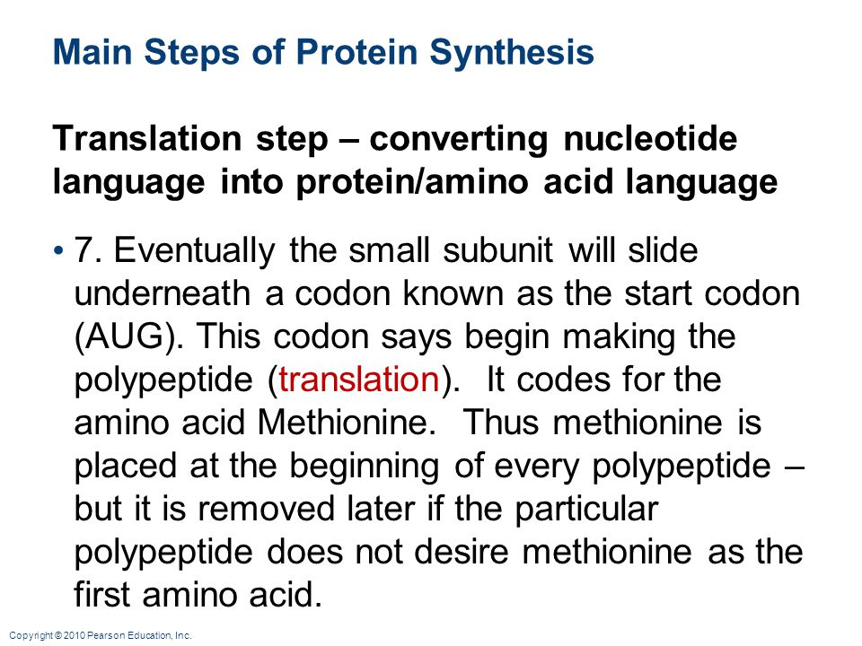Main Steps of Protein Synthesis Translation step – converting nucleotide language into protein/amino acid language