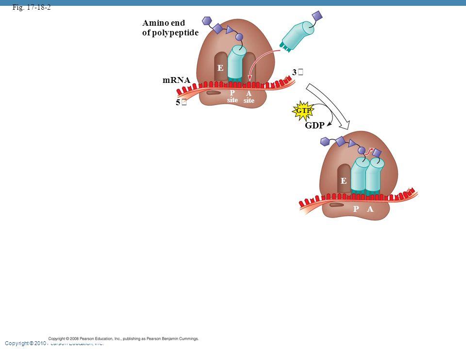 GDP Amino end of polypeptide E 3 mRNA 5 E P A Fig. 17-18-2 P A site