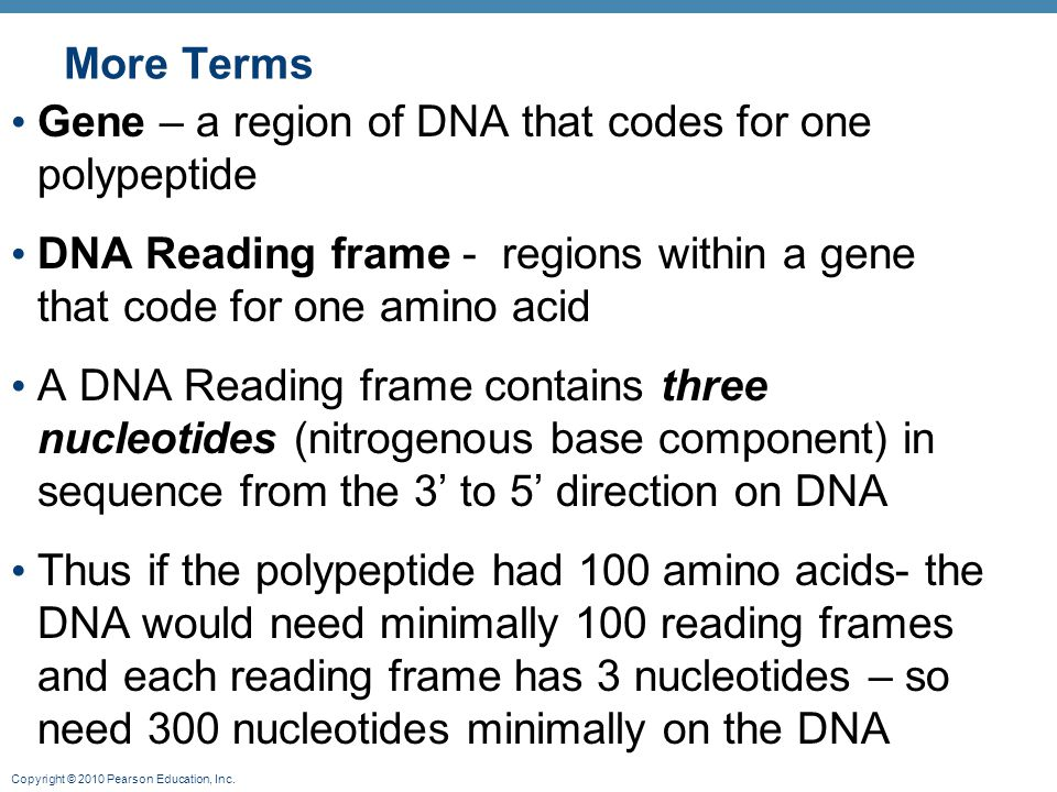 More Terms Gene – a region of DNA that codes for one polypeptide. DNA Reading frame - regions within a gene that code for one amino acid.