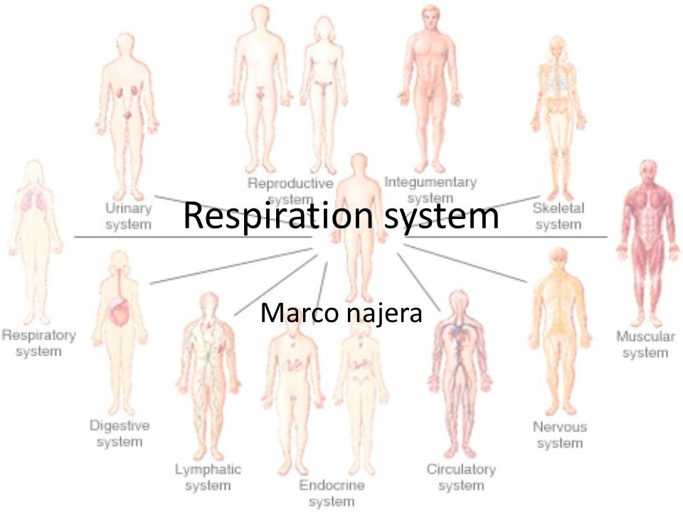 Respiration system Marco najera