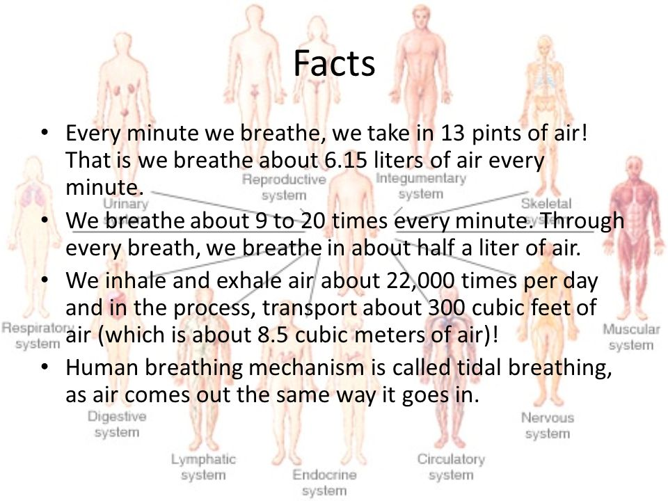 Facts Every minute we breathe, we take in 13 pints of air! That is we breathe about 6.15 liters of air every minute.