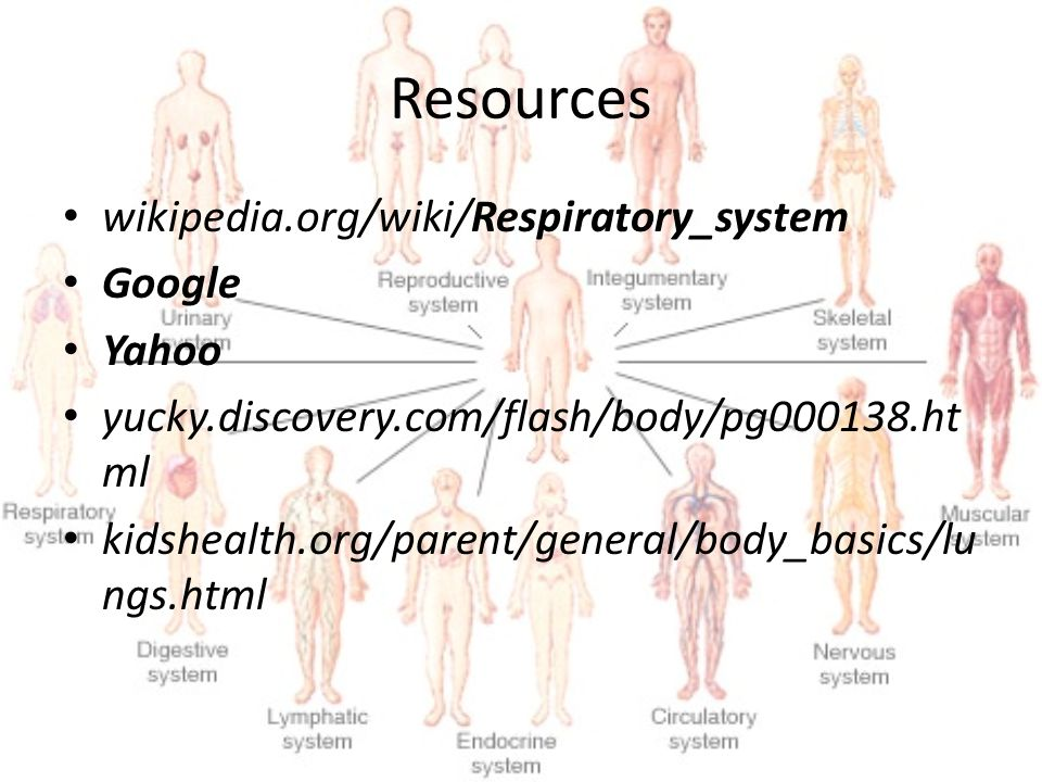Resources wikipedia.org/wiki/Respiratory_system Google Yahoo