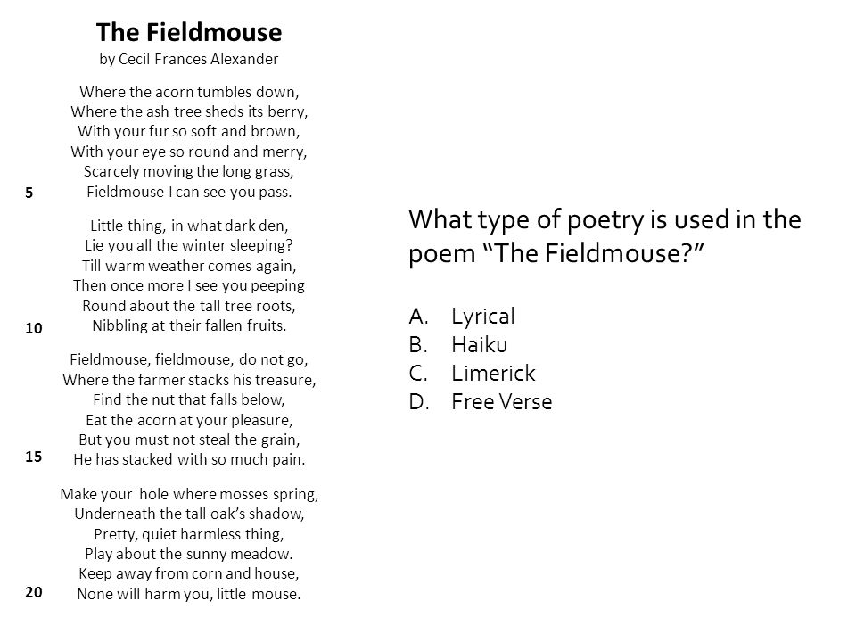 What type of poetry is used in the poem The Fieldmouse