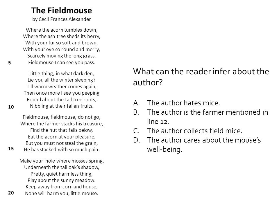 What can the reader infer about the author