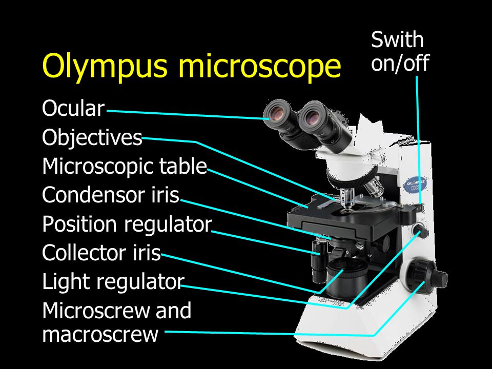 Olympus microscope Swith on/off Ocular Objectives Microscopic table