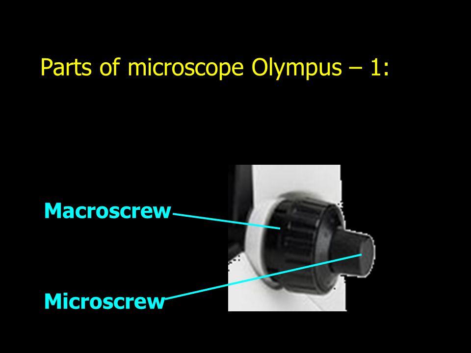 Parts of microscope Olympus – 1: