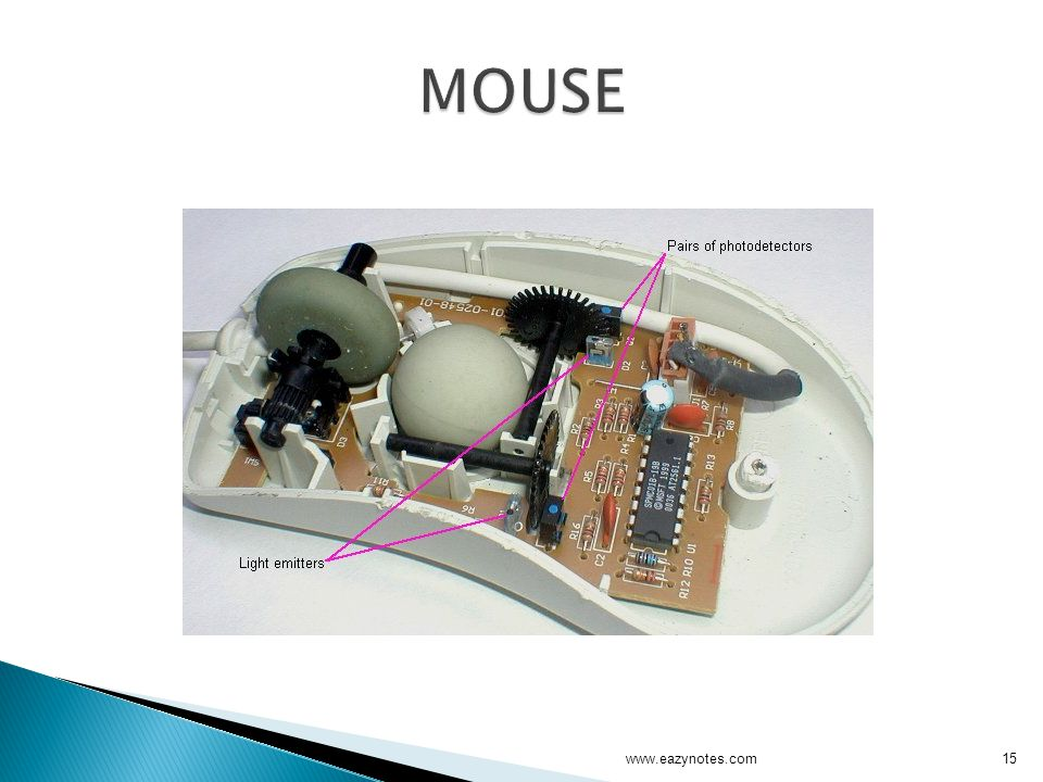 MOUSE www.eazynotes.com
