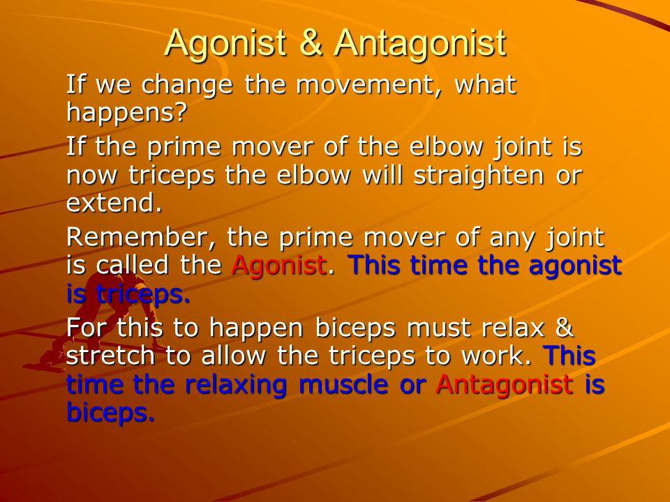 Agonist & Antagonist If we change the movement, what happens