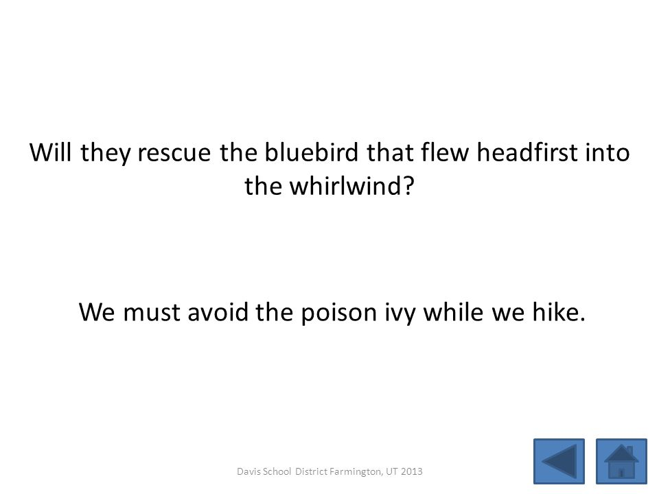 Will they rescue the bluebird that flew headfirst into the whirlwind